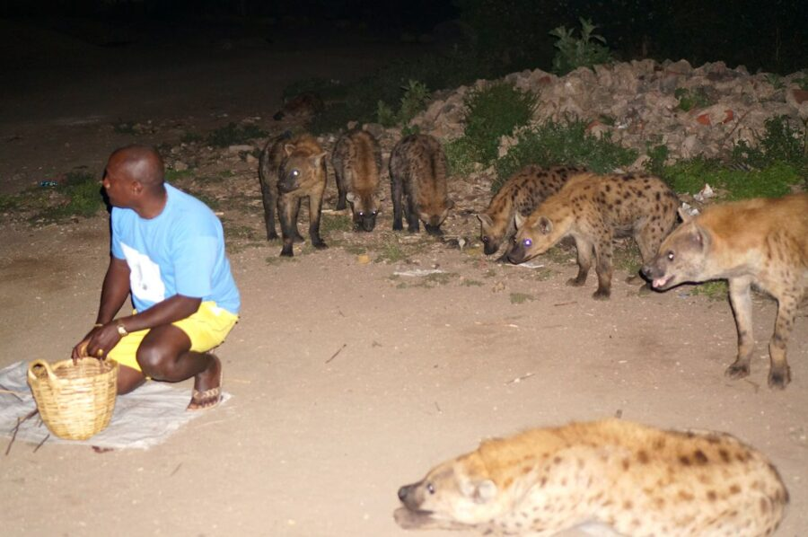 Hyena man in Harar