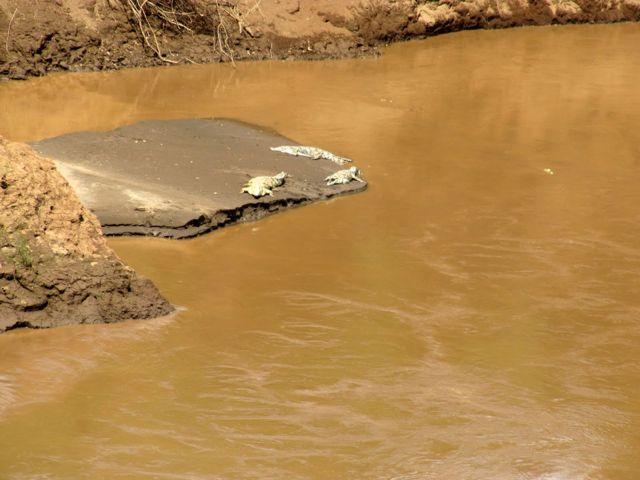 crocodiles ethiopia