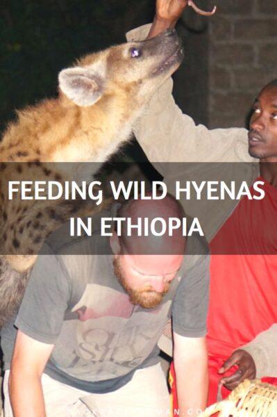 feeding-hyenas-ethiopia