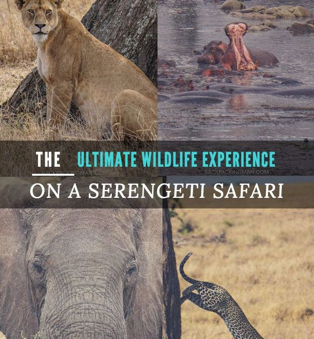 The Ultimate Wildlife Experience On A Serengeti Safari
