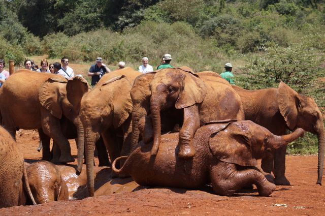 See Baby Elephants In Nairobi