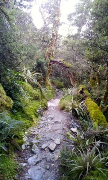 mossy forest routeburn track