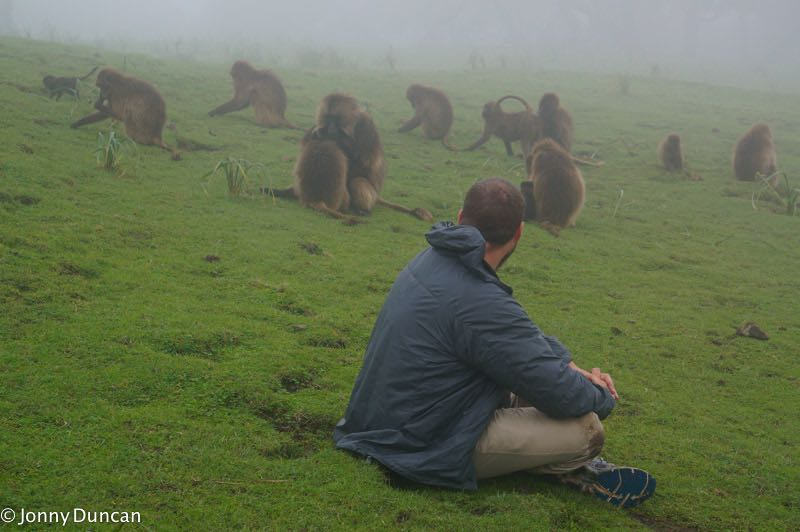 Visiting gelada monkeys in the Simien Mountains