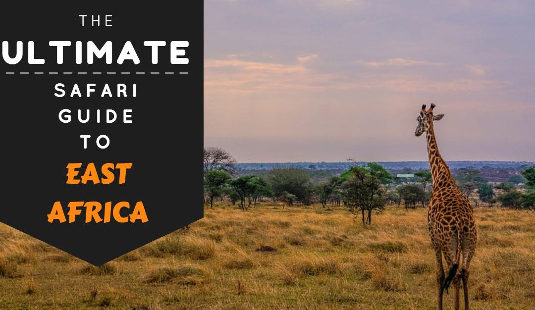 The Ultimate Safari Guide To East Africa