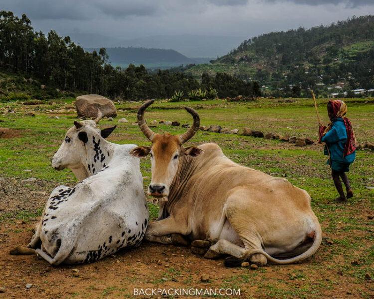 farming in axum ethiopia