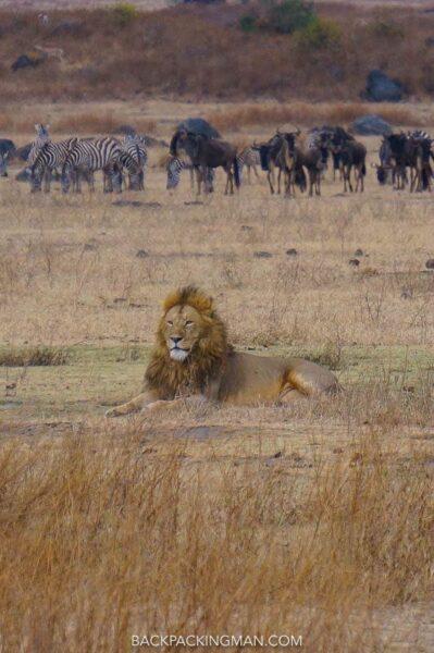 safari in ngorongoro in tanzania