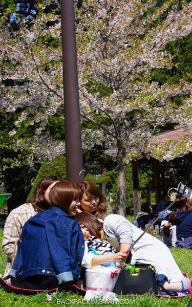 cherry-blossom-sapporo-japan-3