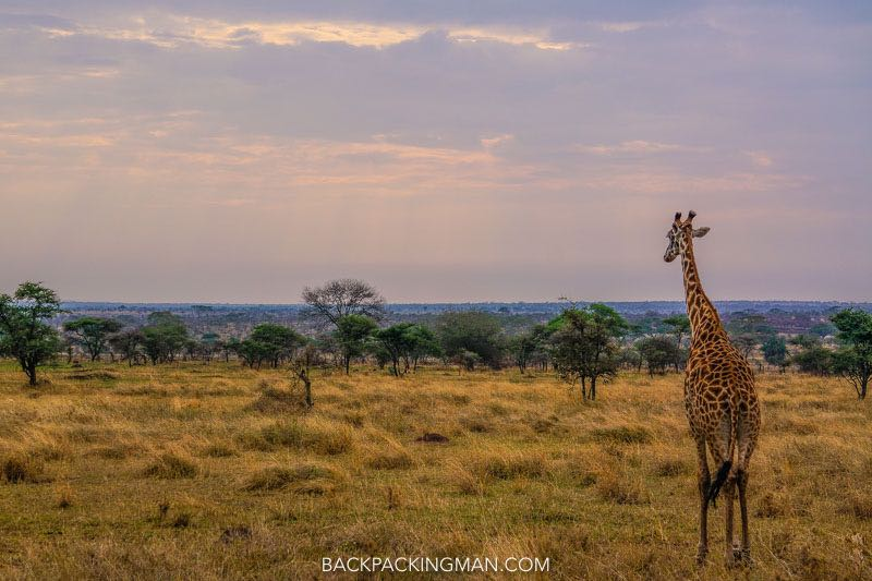 50 Beautiful Photos Of Wildlife In Africa