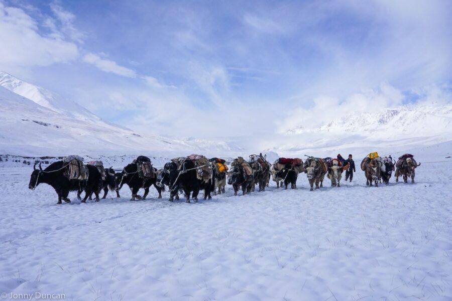 Kyrgyz yak caravan.