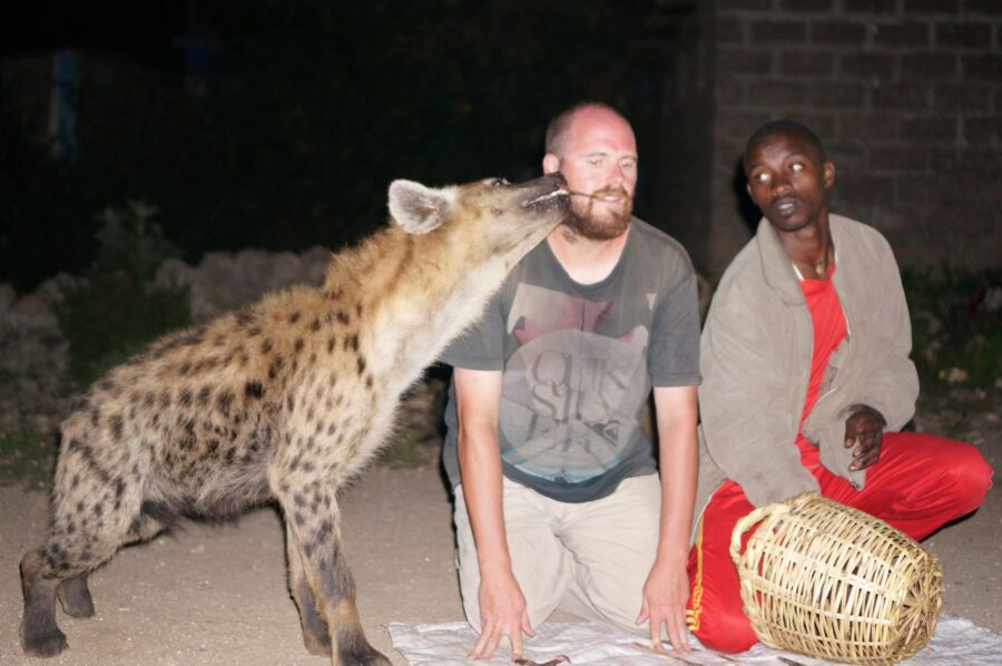 Feeding hyenas from mouth in Harar