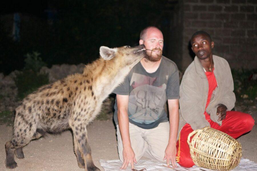 Feeding hyenas from mouth in Harar