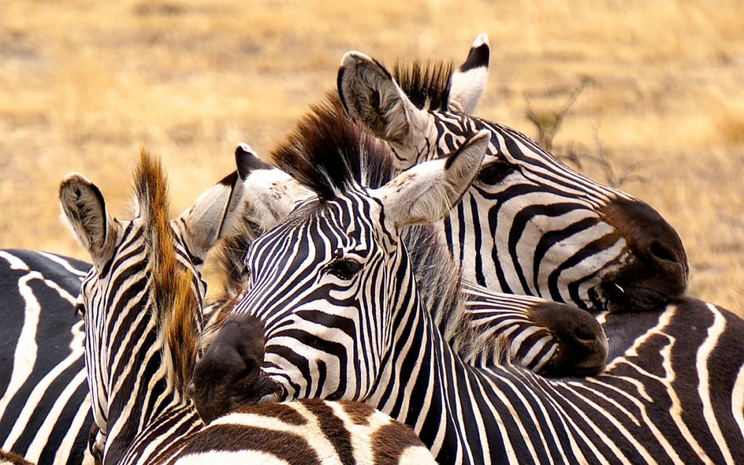 Tarangire National Park In Tanzania Safari