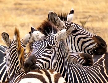 Tarangire National Park In Tanzania Safari