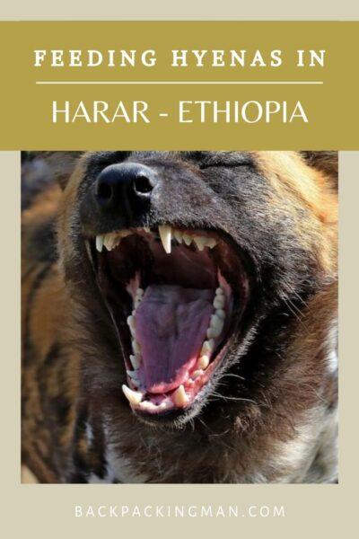 harar ethiopia hyenas