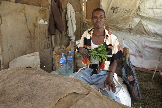qat hargeisa somaliland