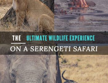 The Ultimate Wildlife Experience On A Serengeti Safari