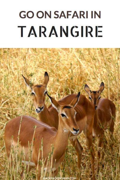 tarangire-antelope