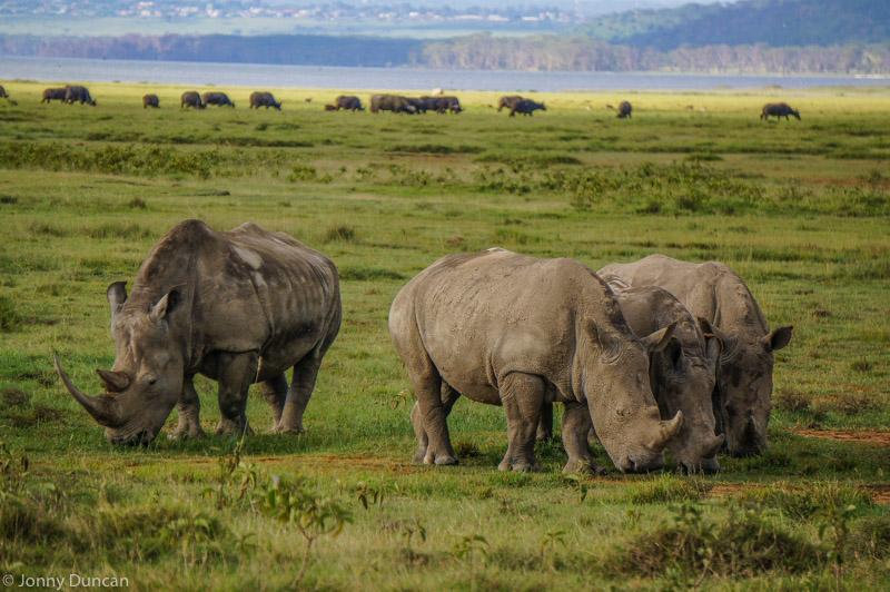 Lake Nakuru National Park Safari in Kenya (Best Place To See Rhinos)
