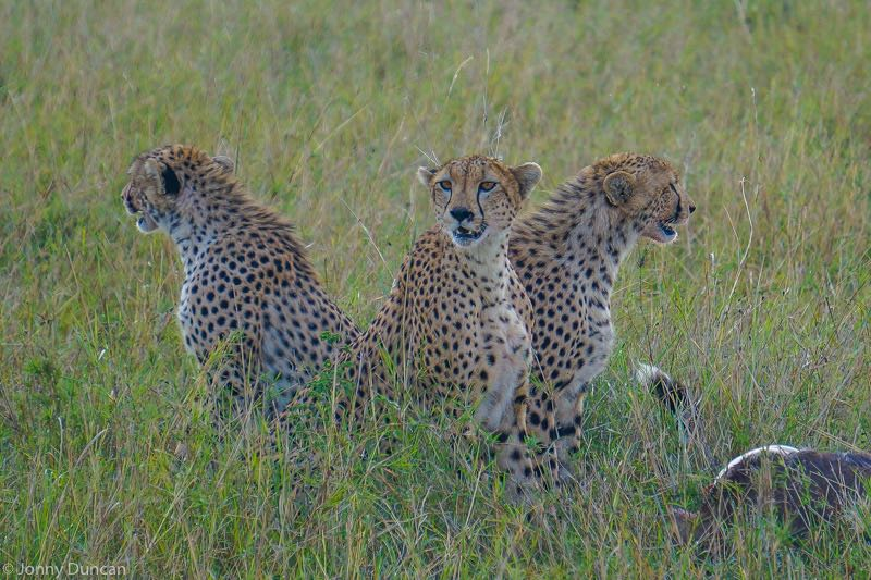3 day Masai Mara Safari in Kenya (One Of The Best Safaris In Africa)