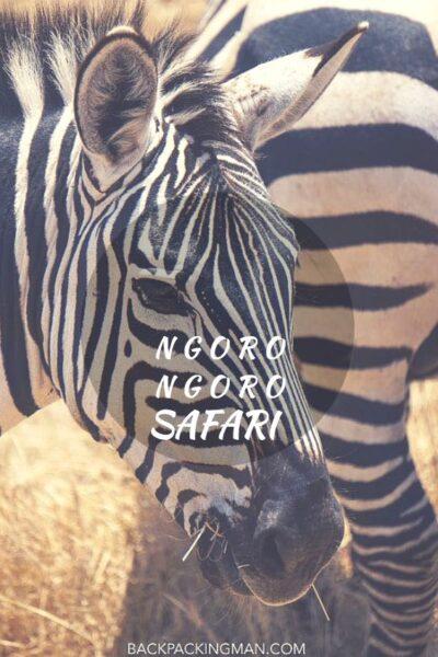 ngorongoro-safari