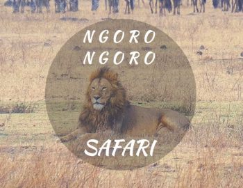 Ngorongoro Safari In Tanzania (Epic Lion time!)