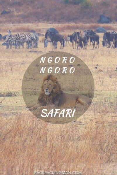 Ngorongoro Safari In Tanzania (Epic Lion time!)