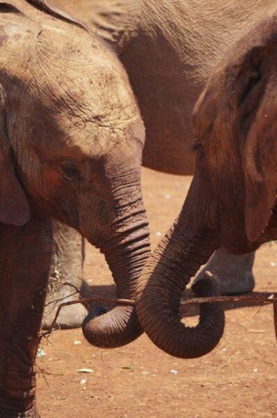 elephant orphanage nairobi