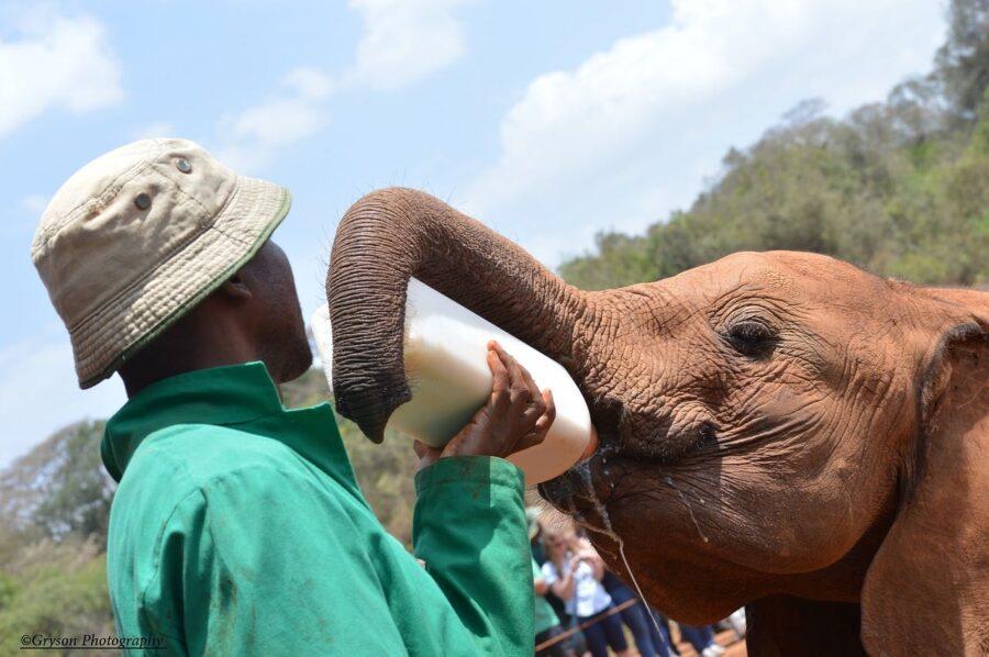 Elephant Orphanage Nairobi (Visiting The David Sheldrick Wildlife Trust)