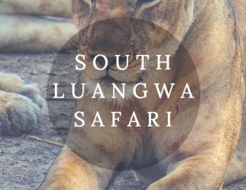 South Luangwa National Park Safari In Zambia