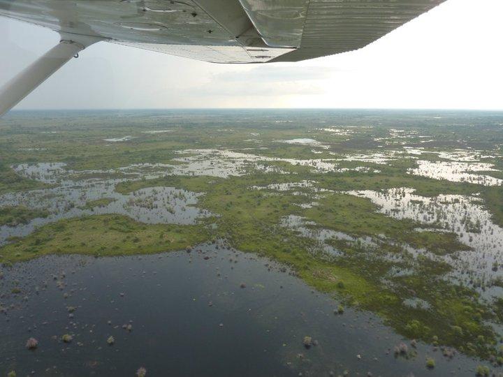 The massive waterways of the Okavango Delta.