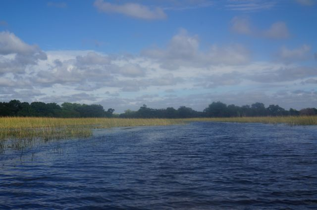 Scenery in the Okavango Delta.