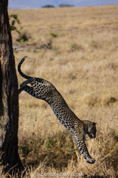 The Wildlife Of East Africa