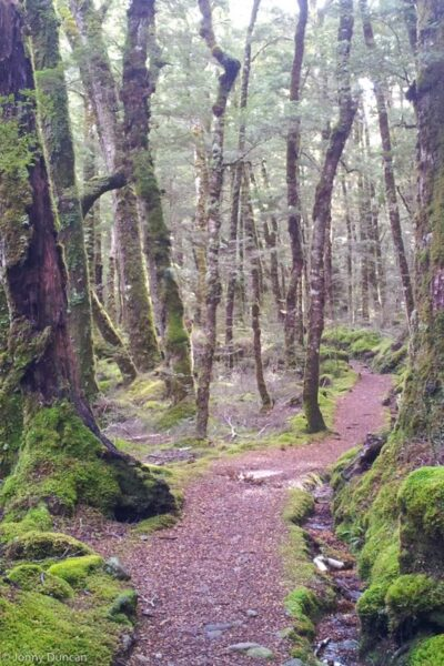 forest New Zealand
