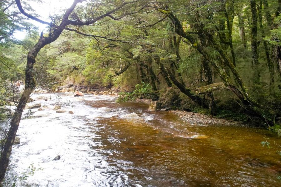 forest river New Zealand