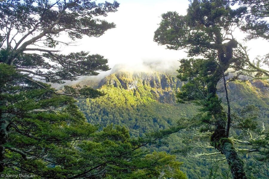 forest New Zealand hiking