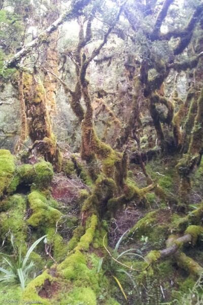 mossy forest New Zealand