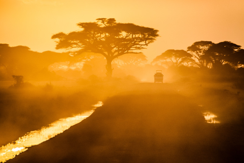 The Ultimate Guide To Safaris In East Africa