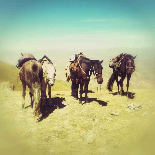 Horses on mountain pass in Kyrgyzstan near Song Kul lake.