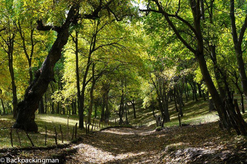 Arslanbob walnut forest
