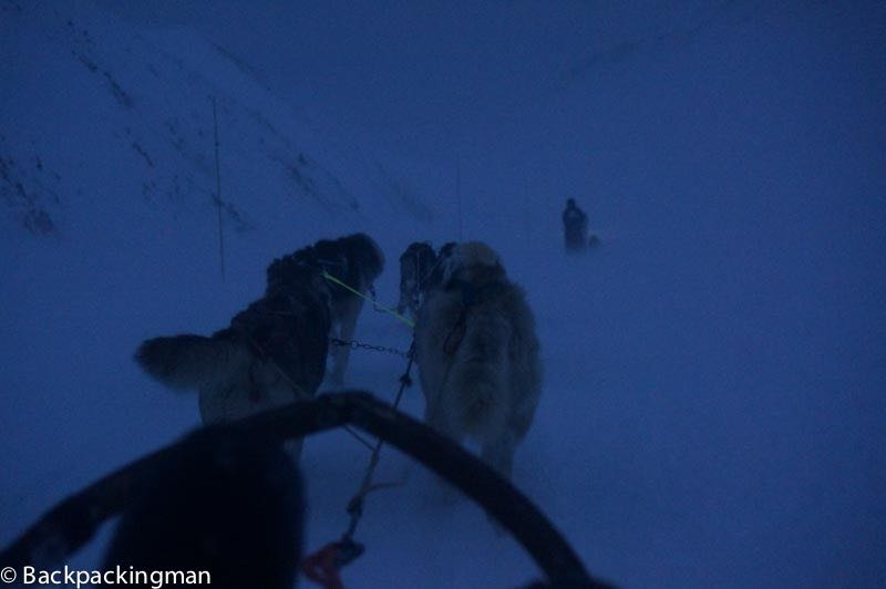 Dog sledding in Svalbard