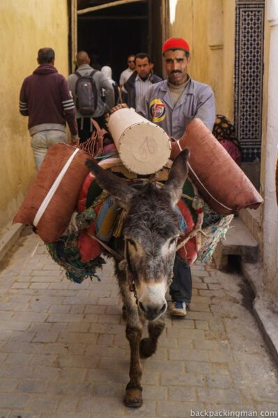 Donkey carrying goods in Fes