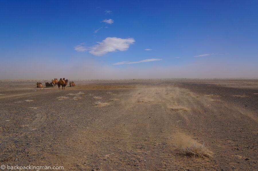 bactrian-camels-sandstorm-gobi-desert-mongolia