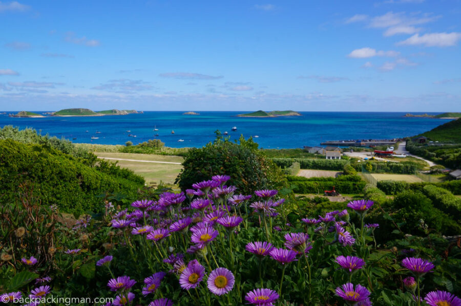 flowers-isles-of-scilly-st-martins
