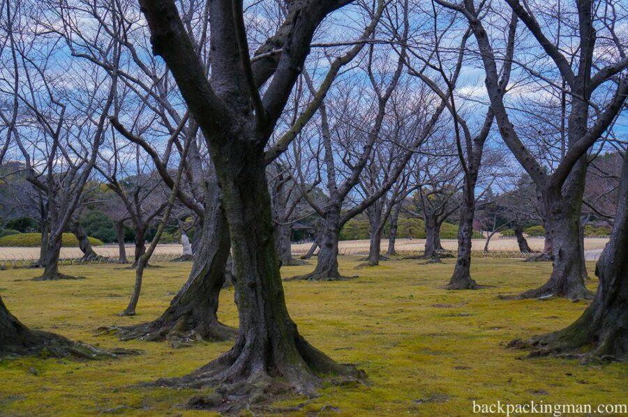 japanese-garden-okayama