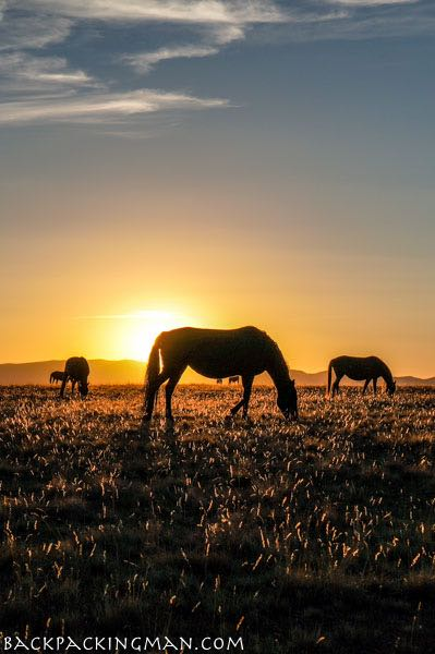 sunset-kyrgyzstan-lake-horses