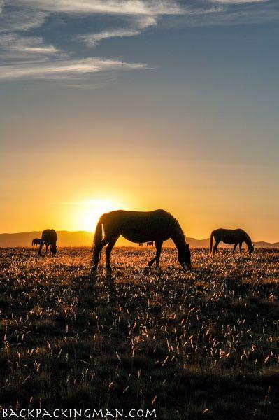 sunset-kyrgyzstan-lake-horses