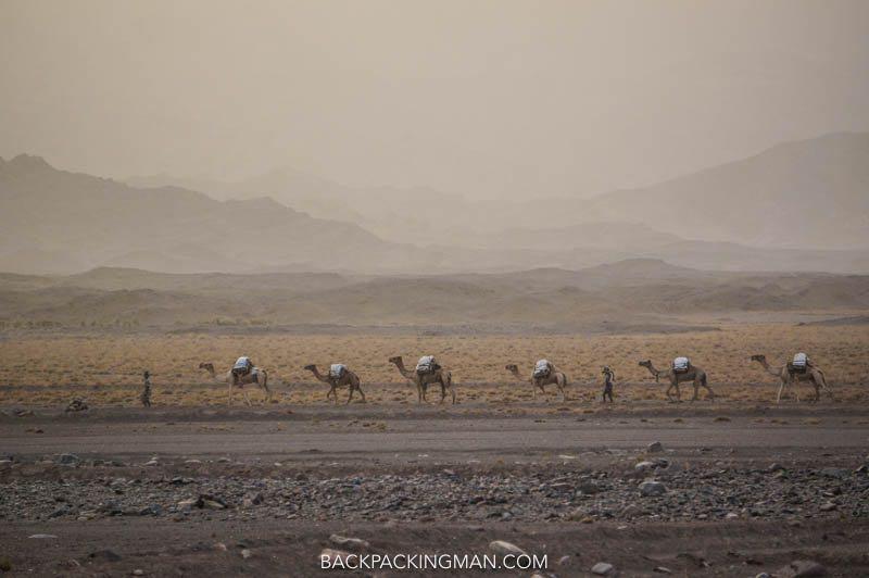 camel caravan salt danakil depression ethiopia