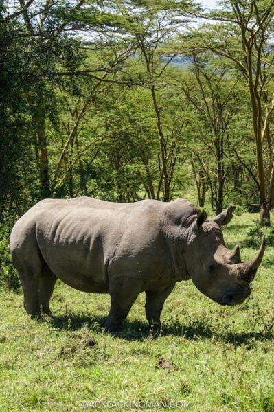 rhino in lake nakuru national park