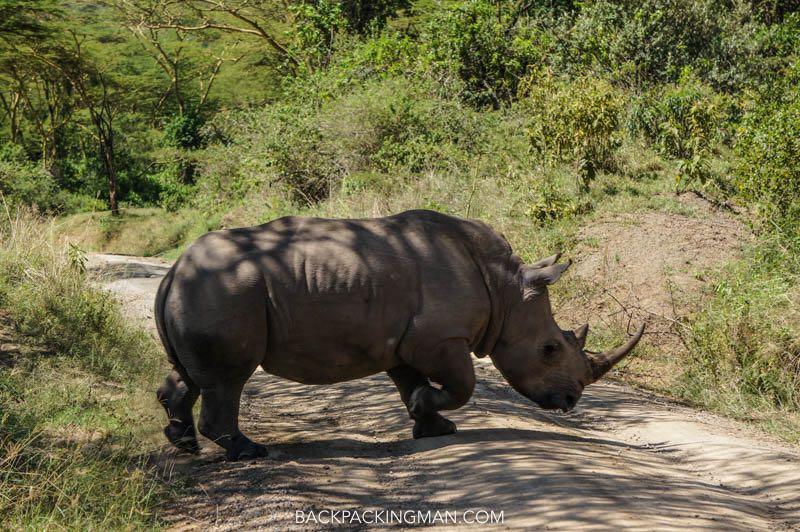 rhinos in lake nakuru kenya