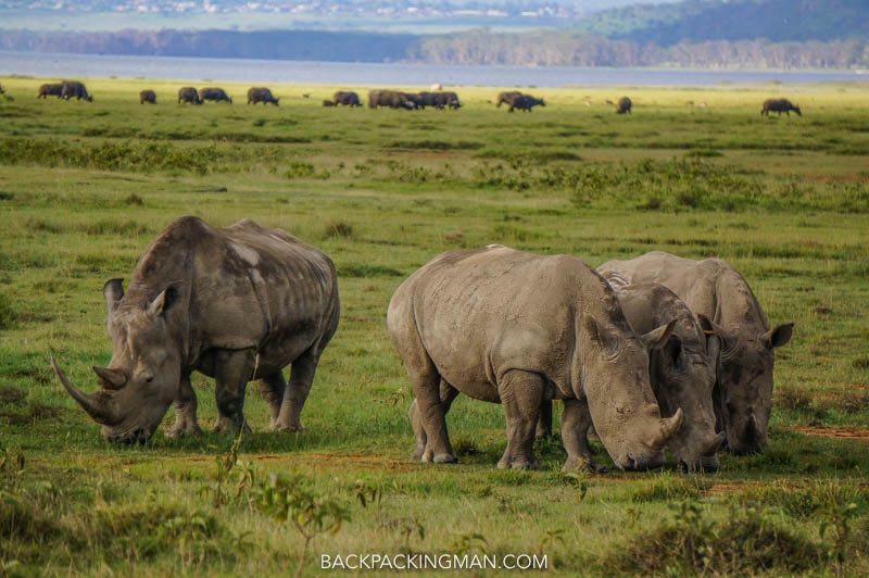 rhinos in lake nakuru